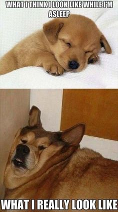 CLUB GIGGLE eyes-closed-is-better 10 Funny Animals Of The Day  3/27/17