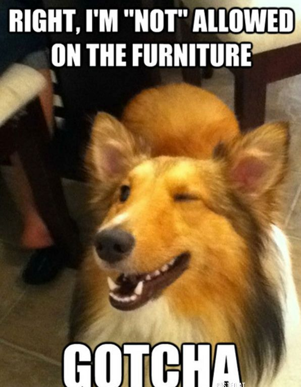 CLUB GIGGLE i-am-so-parking-my-ass-on-it-when-you-leave 10 Funny Animals Of The Day  3/27/17