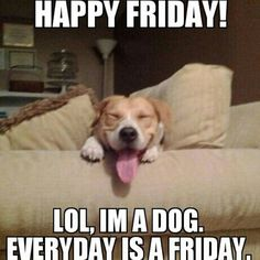 CLUB GIGGLE its-the-weekend 10 Funny Animals Of The Day  3/27/17