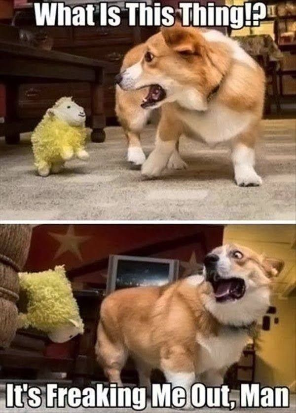 CLUB GIGGLE possessed 10 Funny Animals Of The Day  3/27/17