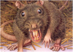 CLUB GIGGLE rats Club Giggle's Top 5 Creatures We Aren't Fond Of