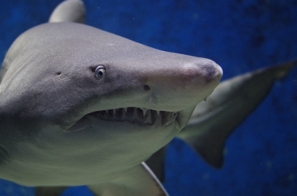 CLUB GIGGLE shark-674867_960_720 Club Giggle's Top 5 Creatures We Aren't Fond Of
