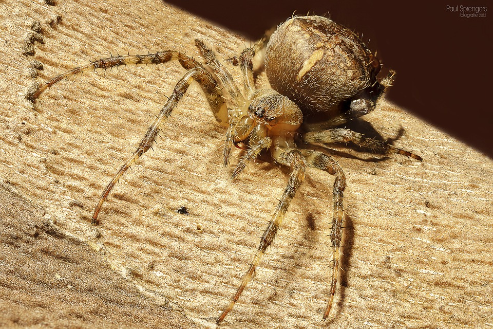 CLUB GIGGLE spider Club Giggle's Top 5 Creatures We Aren't Fond Of