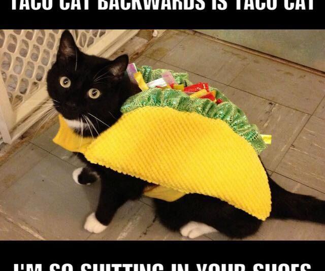 Taco Cat has had enough of you .