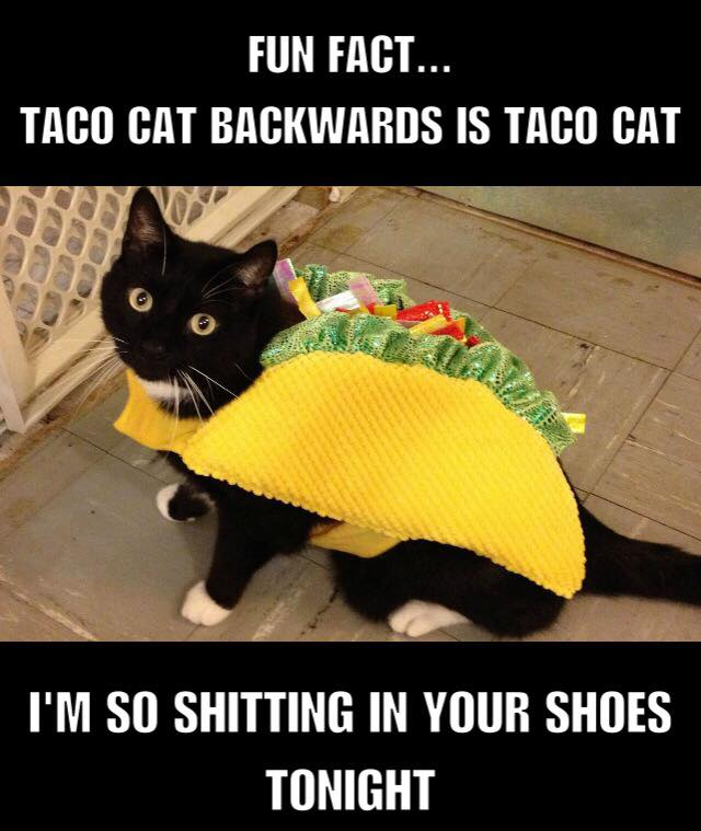 Taco Cat has had enough of you .
