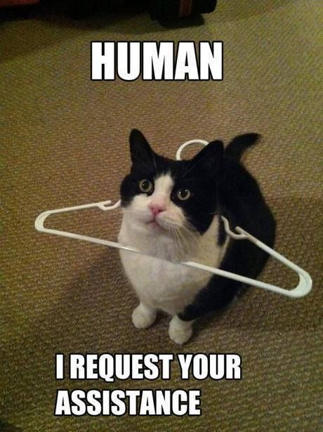 CLUB GIGGLE 33 Club Giggle's Funny Animals Of The Day  4/1/2017