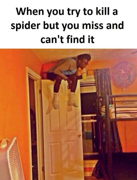 CLUB GIGGLE cant-find-spider Club Giggle's 10 Funny Pictures Of The Day 4/9/2017