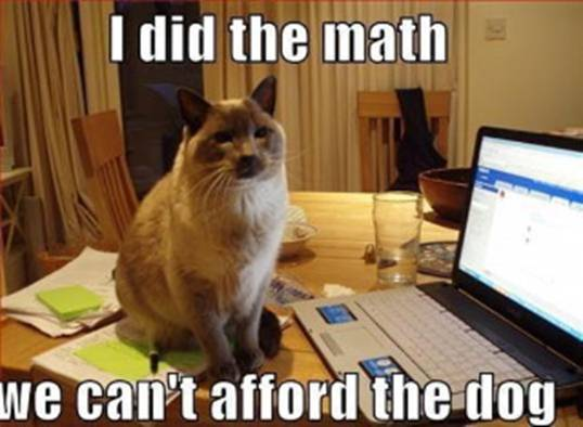 CLUB GIGGLE cat-doing-math Club Giggle's Funny Animals Of The Day  4/3/2017