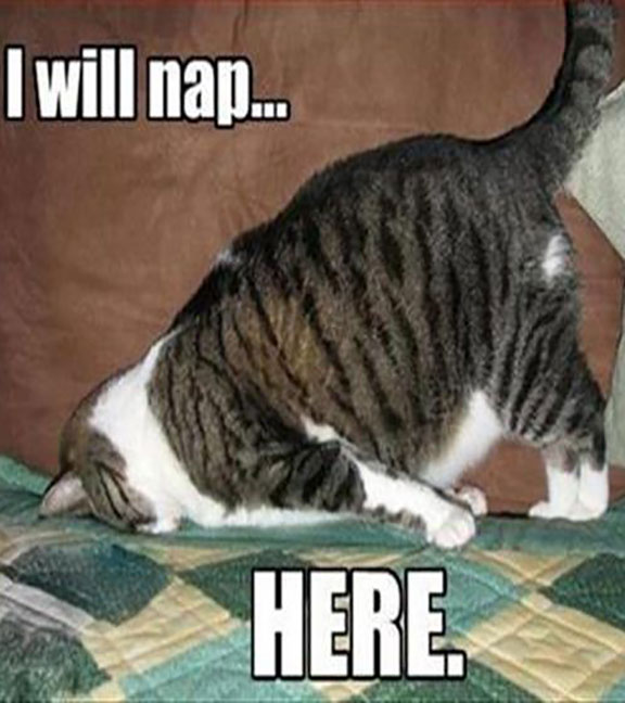CLUB GIGGLE cat-naping Club Giggle's Funny Animals Of The Day  4/3/2017