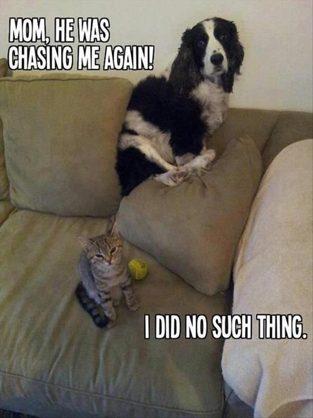 CLUB GIGGLE club-giggle-funny-animal-pictures-of-the-day-41617-2641 Club Giggle Funny Animal Pictures Of The Day  4/16/17
