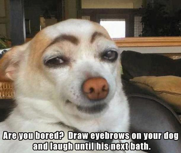 That made me laugh. I think the dog was embarrassed though