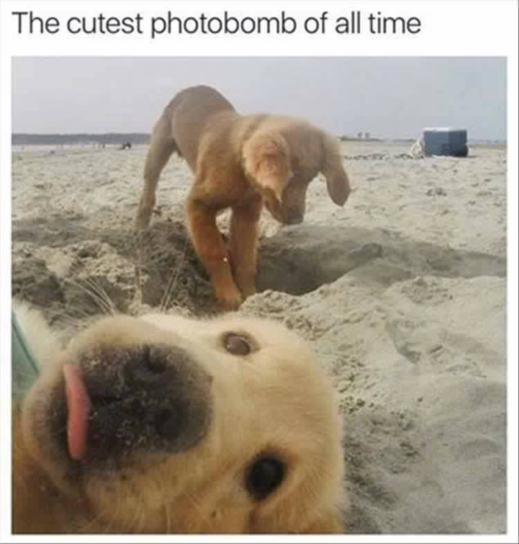 CLUB GIGGLE club-giggles-10-funny-animal-pictures-of-the-day-for-42119-3039 Club Giggle's 10 Funny Animal Pictures Of The Day For 4/21/19