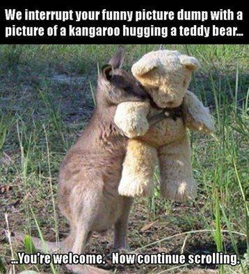 CLUB GIGGLE club-giggles-10-funny-animal-pictures-of-the-day-for-42217-3087 Club Giggle's 10 Funny Animal Pictures Of The Day For 4/22/17