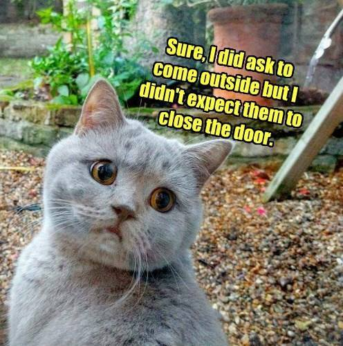 CLUB GIGGLE club-giggles-10-funny-animal-pictures-of-the-day-for-42217-3096 Club Giggle's 10 Funny Animal Pictures Of The Day For 4/22/17