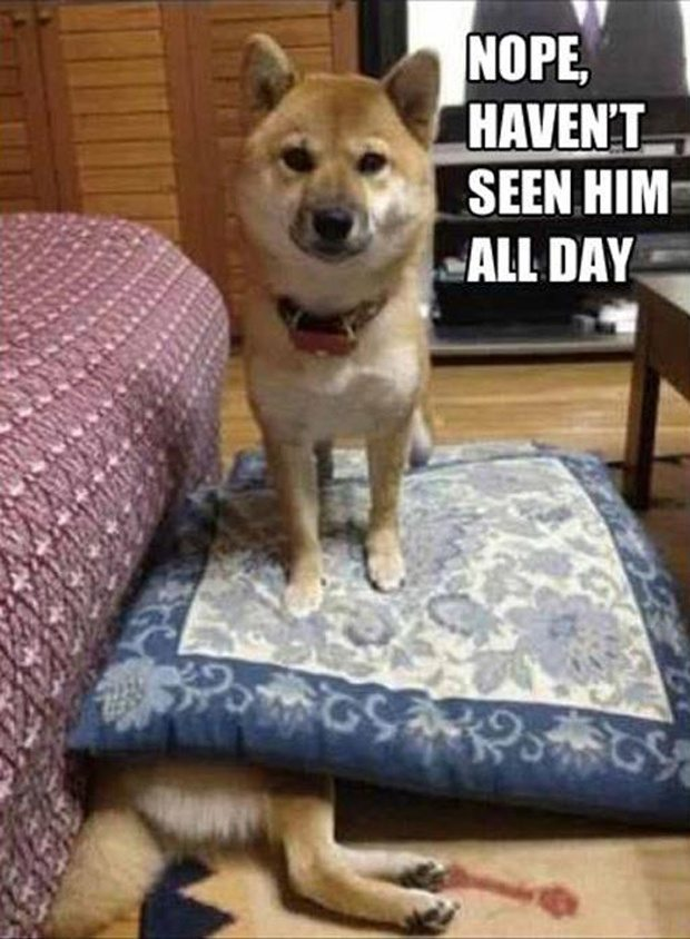 CLUB GIGGLE club-giggles-10-funny-animal-pictures-of-the-day-for-42317-3182 Club Giggle's 10 Funny Animal Pictures Of The Day For 4/23/17