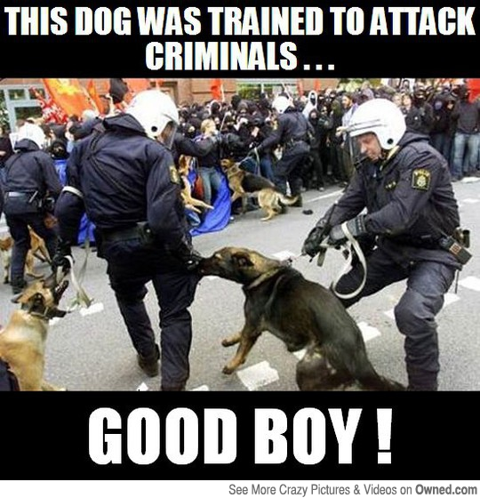 CLUB GIGGLE good-dogs Club Giggle's Funny Police Pictures 4/13/2017