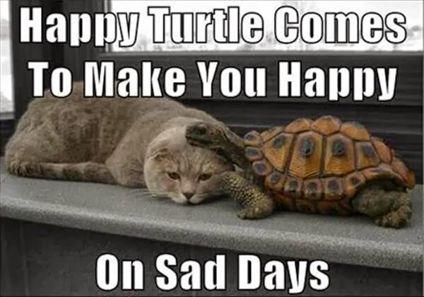 CLUB GIGGLE hapy-turtle Club Giggle's 10 Funny Animals Of The day 4/7/2017