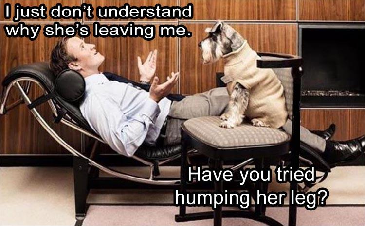 CLUB GIGGLE humping-dog Club Giggle's 10 Funny Pictures Of The Day 4/9/2017
