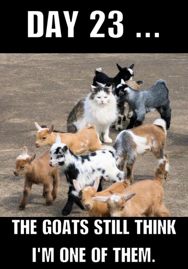 CLUB GIGGLE i-am-goat Club Giggle's Funny Animals Of The Day 4/9/2017