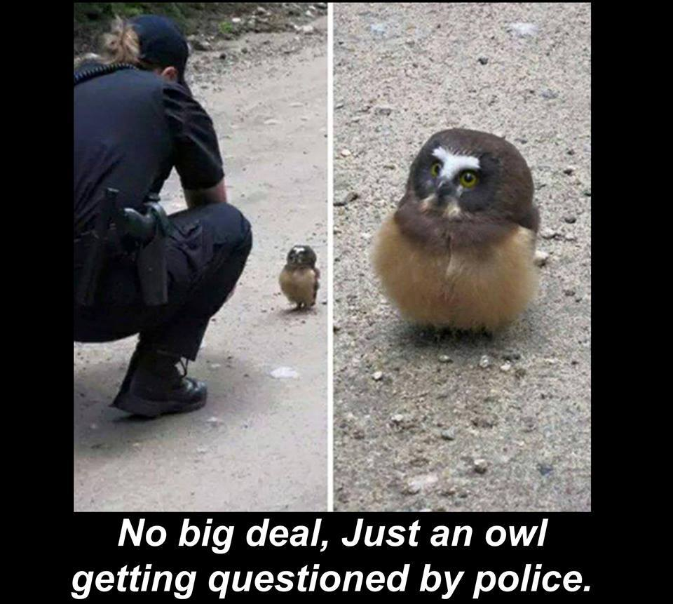 CLUB GIGGLE owl-question-by-police Club Giggle's 10 Funny Animals Of The Day 4/15/2017