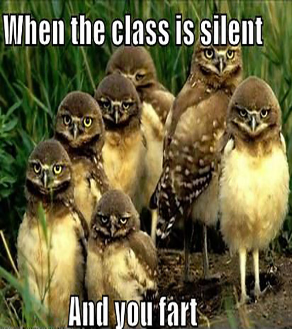 CLUB GIGGLE owl Club Giggle's Funny Animals Of The Day  4/3/2017