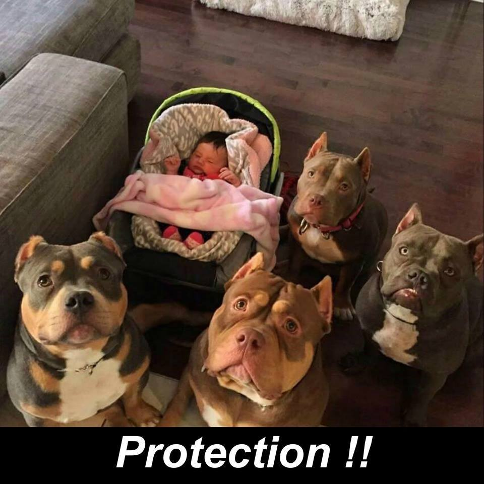 CLUB GIGGLE protection Club Giggle's 10 Funny Animals Of The Day 4/15/2017