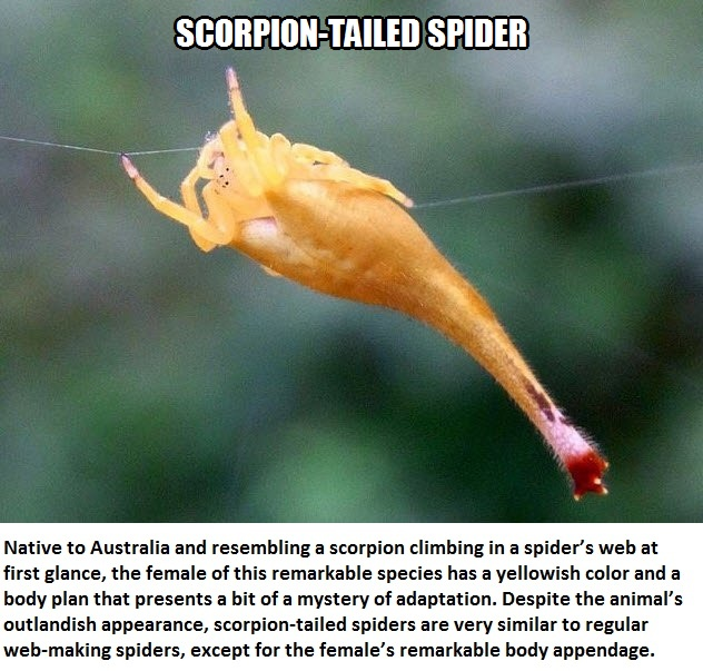 CLUB GIGGLE scorpion-tailed-spider Top 5 Bizzare Spiders
