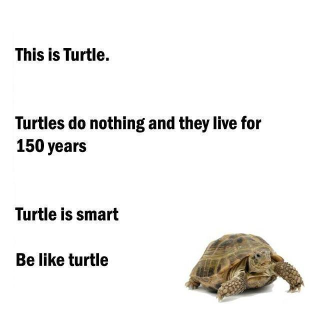 CLUB GIGGLE smart-turttle Club Giggle's 10 Funny Animals Of The Day 4/15/2017