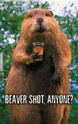 CLUB GIGGLE 14590407_1109207272519432_6804369983985446603_n Club Giggle Brings You 10 Funny Pictures For 5/12/17