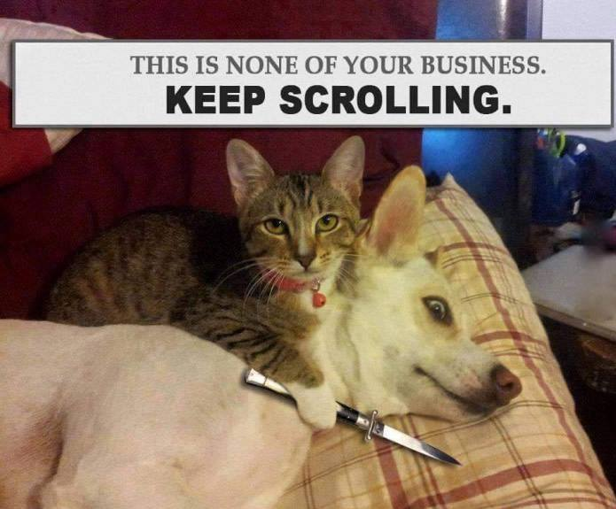 CLUB GIGGLE 391 23 Funny Pictures Of The Day5/17/2017