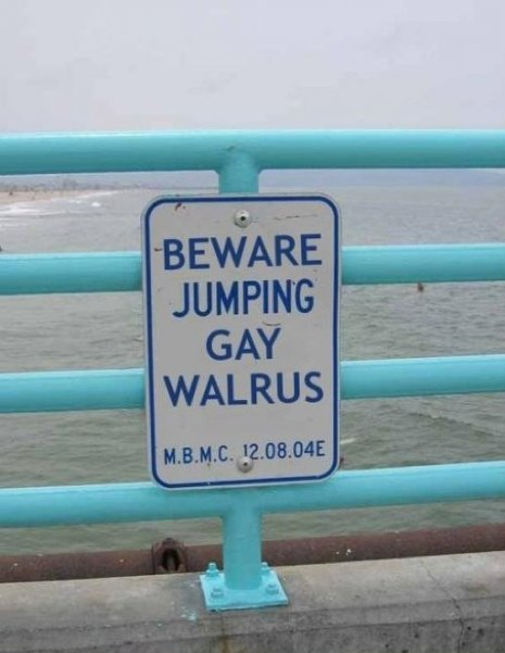 CLUB GIGGLE gay-walrus Club Giggle's 24 Funny Signs  5/6/2017