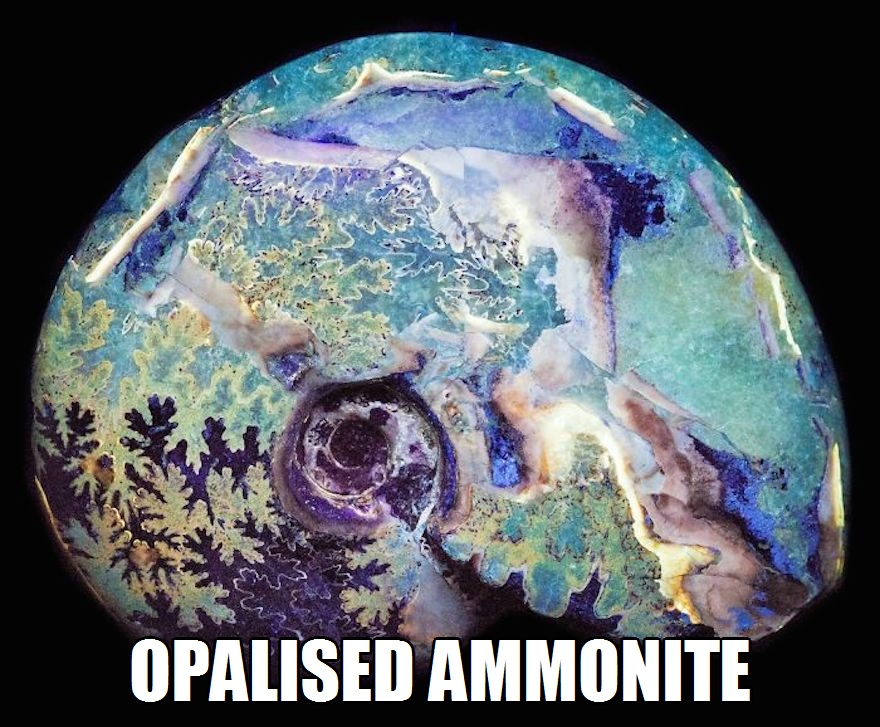CLUB GIGGLE opalised-ammonite 17 World's Most Amazing Minerals And Gemstones 5/2/2017