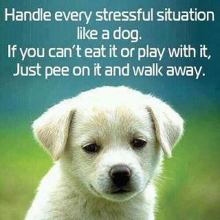 CLUB GIGGLE 17264713_1340213849377354_3397143146723618799_n Club Giggle Brings You 15 Funny Pictures For The Day Of 6/13/17