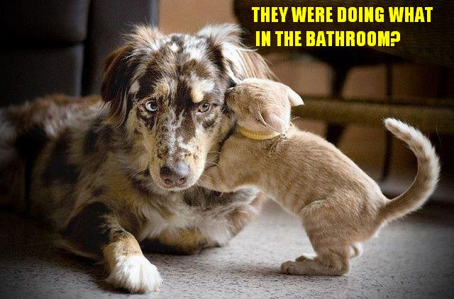 CLUB GIGGLE 185 Club Giggle's 30 Funny Animals Pictures of the day 6/15/17