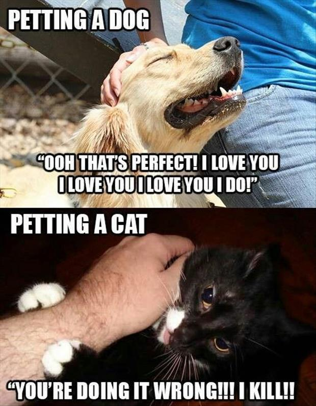 CLUB GIGGLE 2010 Club Giggle,s 15 Funny Pictures For the day  6/25/2017