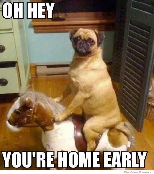 CLUB GIGGLE 593 Club Giggle Brings You 20 Funny Pictures For The Day Of 6/1/17