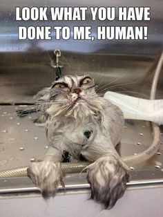 CLUB GIGGLE 93 Club Giggle,s 20 Funny Pictures Of The Day 9/6/17