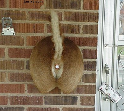 CLUB GIGGLE RedneckDoorbell Club Giggle's 62 Red Neck Inventions