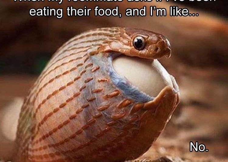 CLub Giggle Brings You 20 Funny Pictures For The Day Of 8/20/16