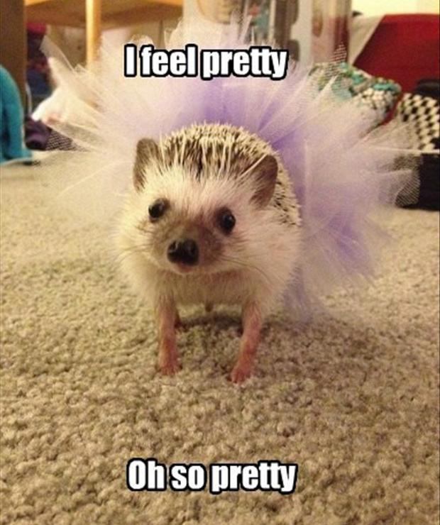 CLUB GIGGLE funny-pretty-animals Club Giggle Brings You 20 Funny Pictures For The Day Of 8/22/17