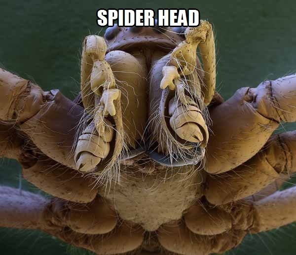 CLUB GIGGLE 457 Creepy crawlies Amazing  Microscope pictures of insects...