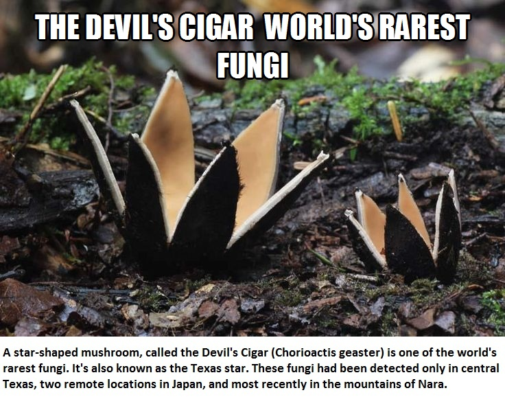 CLUB GIGGLE 362 Club Giggle's The 10 Weirdest Mushroom and Fungi Species In The World