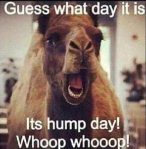 CLUB GIGGLE 55539156_10155727527995378_2043121758092918784_n-295x300 Club Giggle's Hump Day Wednesday Memes With New Funny Flavor