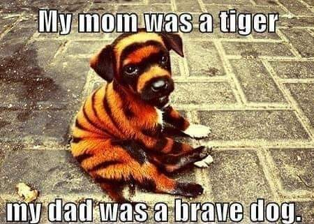 CLUB GIGGLE club-giggles-twisted-tuesday-memes-for-a-laugh-at-the-end-of-the-day-14394 Club Giggle's Twisted Tuesday Memes For A Laugh At The End Of The Day