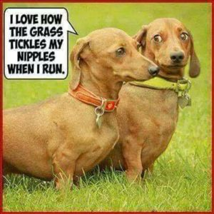 CLUB GIGGLE 6-300x300 Club Giggle's Saturday Morning Memes For A Laugh With Your Coffee