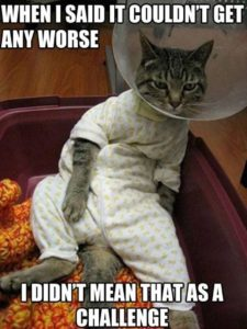 CLUB GIGGLE 1101-225x300 Club Giggle's 20 Wednesday Afternoon Memes For A Laugh With Your Coffee