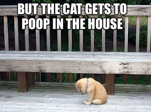 CLUB GIGGLE 228 Friday morning Funny Pictures 20 pics Dump