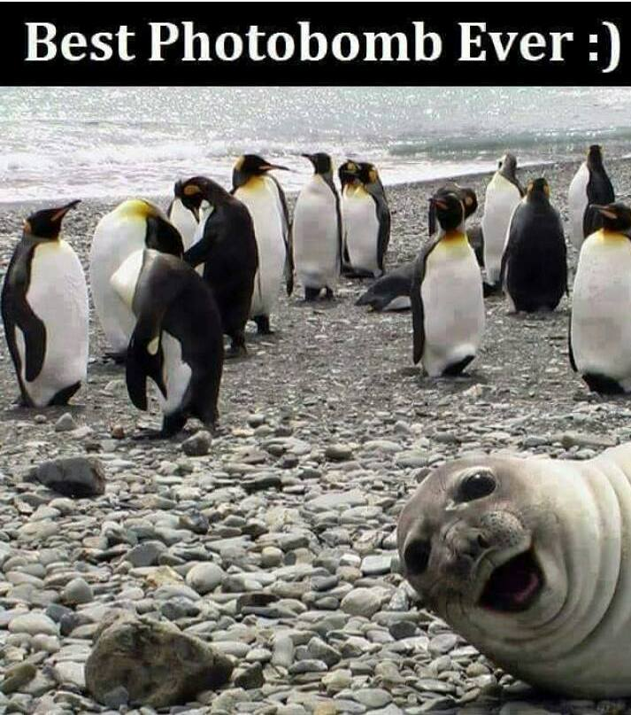 CLUB GIGGLE 439 Morning 20 Funny Pictures