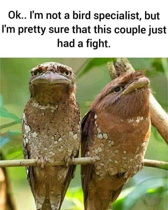 CLUB GIGGLE couple-fighting 26 Funny Pictures Of The Week