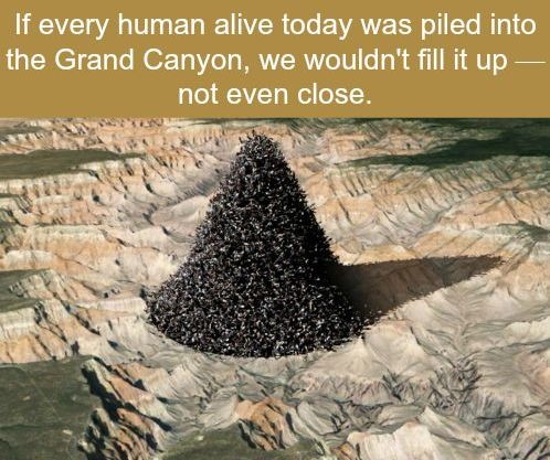 CLUB GIGGLE weird-facts41 32 Weird Facts To Distract You That It Is Monday